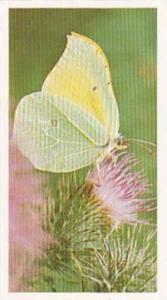 Grandee Vintage Cigarette Card British Butterflies No 29 Brimstone