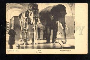 033580 Prehistoric Skeleton of Elephant Vintage RUSSIAN PC