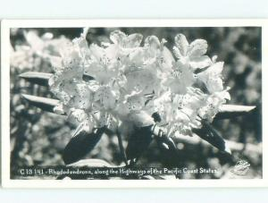 Pre-1950 rppc NICE VIEW BEAUTIFUL RHODODENDRON FLOWERS ON PACIFIC COAST W0474