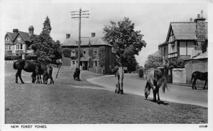 New Forest Ponies Street Horses Cottages Postcard
