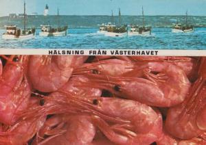 Norwegian Halsning Fran Vasterhavet Ship Boat Norway Fishing Trawler Postcard