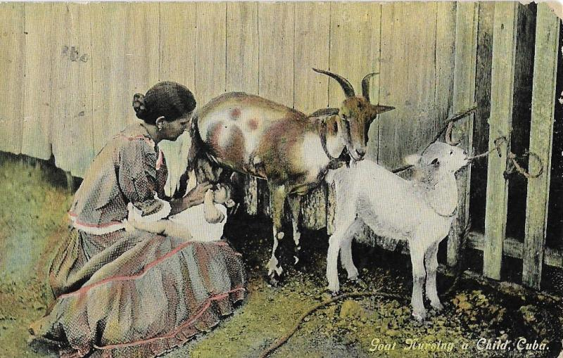 Posted 190? Goat Nursing Kid VG Cuban Stamp Published PC Antique