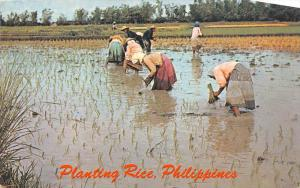 476 Philippines Anters 1960's  Planting Rice