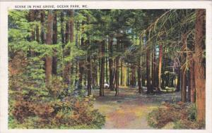 Maine Ocean Park Scene In Pine Grove 1936
