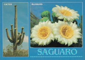 Arizona Saguaro Cactus & Blossoms Arizona State Flower
