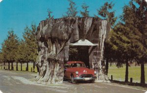 Tree Stump , Highway 99 , Washington , 1950-60s