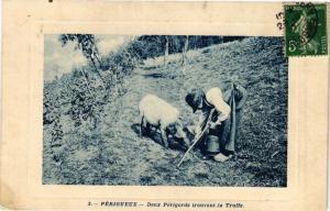 CPA PÉRIGUEUX-Deux PÉRIGORDS trouvant la Truffe (233858)