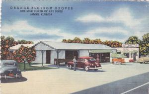Orange Blossom Groves, One Mile North Of Bay Pines, LARGO, Florida, PU-1951