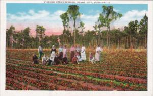 Picking Strawberries Plant City Florida
