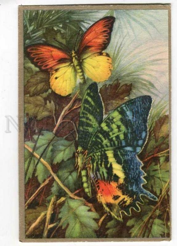 257016 FINLAND Colorful BUTTERFLY on Flowers Vintage postcard