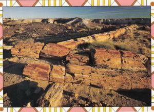 Arizona Petrified Forest Petrified Logs