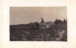 Manistique Michigan Potato Farm Real Photo Vintage Postcard JJ658856