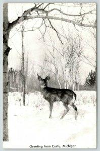 Curtis Michigan~Deer in Snow~Buck Looks Left~Birch Trees~1940s RPPC