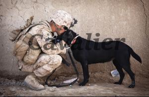 Postcard Soldier with Black Labrador Dog, Mans Best Friend, Love Affection #451
