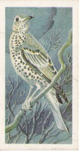 Trade Cards Brooke Bond Wild Birds in Britain No5 Mistle Thrush