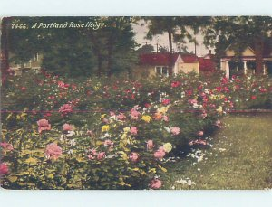 Divided-back ROSE HEDGES BY THE HOUSES Portland Oregon OR AD7504