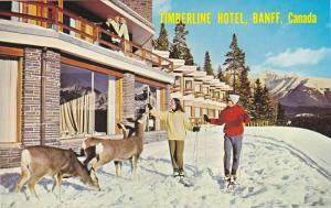 Tame deer, The Timberline Hotel,  Banff,  Alberta,  Canada,  40-60s
