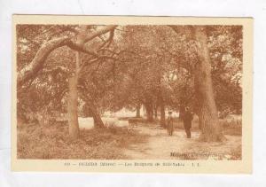 Bosquets de Sidi Yahia,Oudjda,Morocco 1910-20s