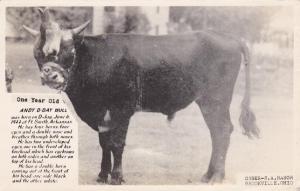 Freak Bull born in Fort Smith AR Arkansas 1944 4 horns 4 eyes 2 noses - pm 1952