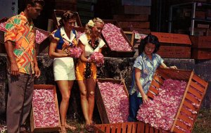 Crate of Hawaiian Vanda Orchids Flowers