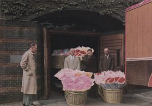 AALSMEER-HOLLAND, The Flower Centre of Europe, 50-70s