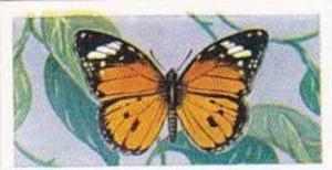 Swettenhams Tea Vintage Trade Card Butterflies & Moths 1958 No 3 Danaus Chrys...