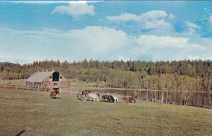 Cariboo Historic Site, Cariboo Ranch, Wagon Train stop on Old Cariboo Trail, ...
