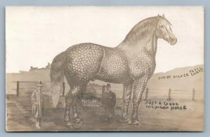 EXAGGERATED MICHIGAN HORSE ANTIQUE REAL PHOTO POSTCARD RPPC COLLAGE by GIBSON