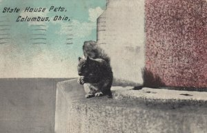 COLUMBUS , Ohio , 1912 ; State House Pets (Squirrel)