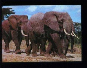 210032 KENYA East African Game Elephants old postcard