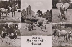 Tierpark Hagenbeck German Zoo Antilope Elefant Gnus Straube Real Photo Postcard