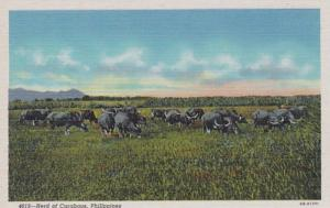 Philippines Herd Of Carabaos Curteich