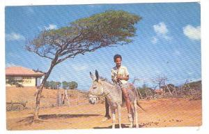 Dividivi Tree, Boy riding donkey, Curacao, Netherland Antilles, 40-60s