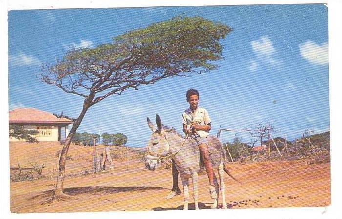 Dividivi Tree, Boy riding donkey, Curacao, Netherland Antilles, 40-60s