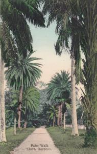 Palm Walk , Govt. Gardens , Port of Spain , Trinidad , 00-10s