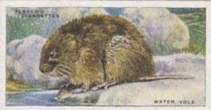 Player Vintage Cigarette Card Animals Of The Countryside No 26 Water Vole  1939