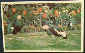 Postcard Unused Lambart Gardens, Portland, OR LB