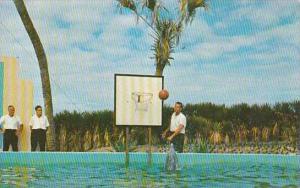 Florida Marineland Algae The Porpoise Palys Basketball At Marine Studios