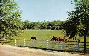 Blue Grass Horse Farm KY , USA Horse Unused