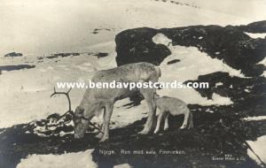 norway norge, FINMARKEN, Ren med Kalv, Reindeer with Calf (1927) RPPC