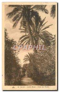Old Postcard Blida Garden Bizot Allee des Roses