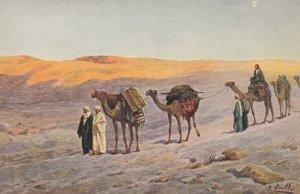 EGYPT , 00-10s ; Camels , Caravane en campagne #2