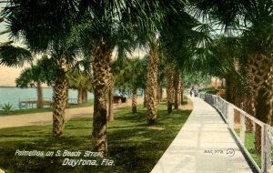 FL - Daytona. Palmettos on South Beach Street