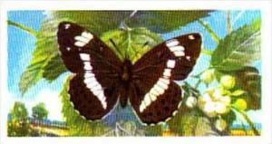 Brooke Bond Tea British Butterflies No 27 White Admiral