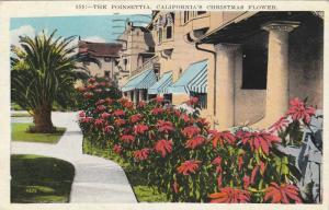 The Poinsetta, California's Christmas Flower, PU-1933