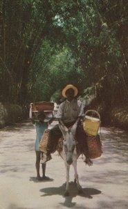 JAMAICA, 1950-1960s; Local Transportation Through Bamboo Grove, Donkey