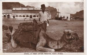 RP: Boy & Camel at rest after feeding , ADEN , Yeman , 00-10s