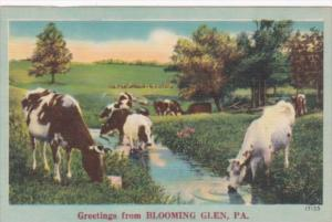 Pennsylvania Greetings From Blooming Glen With Cows
