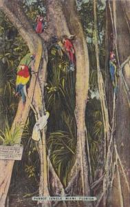 Florida Miami Parrot Jungle