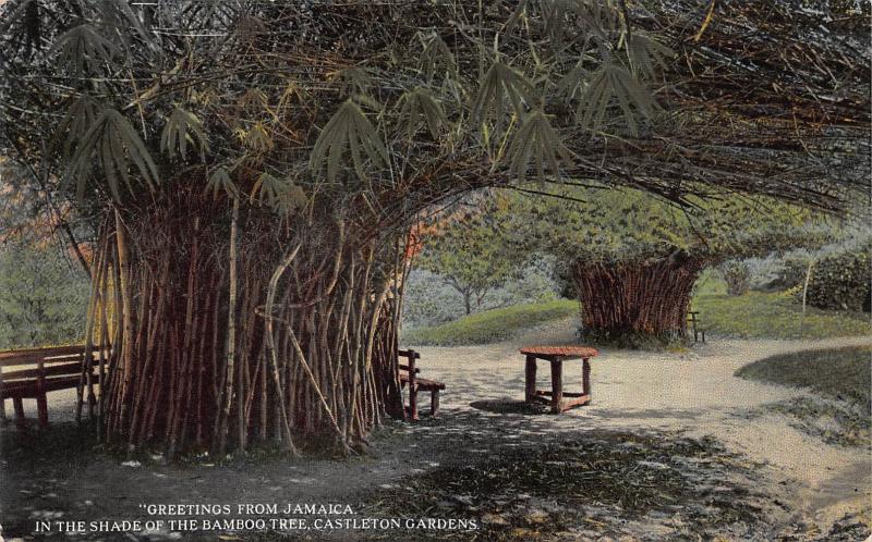 Shade of the Bamboo Tree, Castleton Gardens, Jamaica, Early Postcard, Unused